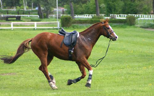 equestrianCroppedSm
